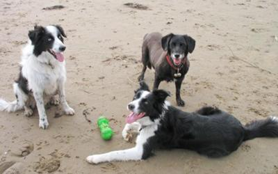 L-R:  Blu, Dusty and Rosie Having Fun at the Beach