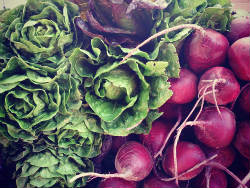 community supported agriculture, CSA