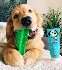 Bristly - The World's Most Effective Toothbrush